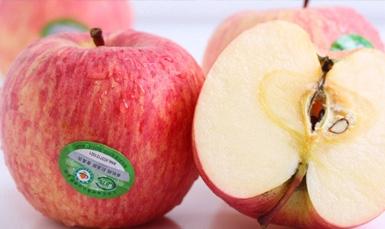 招远红富士苹果